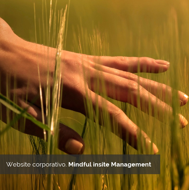 Diseños web Corporativo - Minful Insite Management | Bingin Design